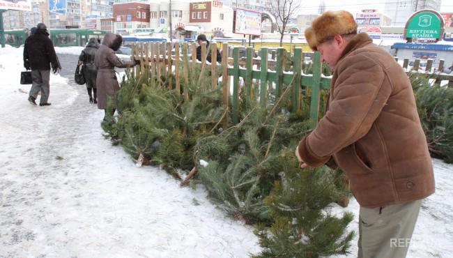 Стала известна стоимость новогодних елок