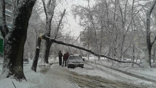 Харьковчане дождались первого снега: стихия поломала деревья и изуродовала автомобили