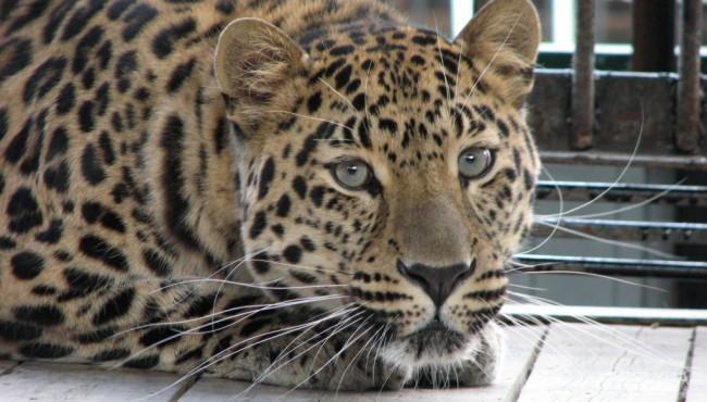 В Крыму гибнут животные в зоопарках