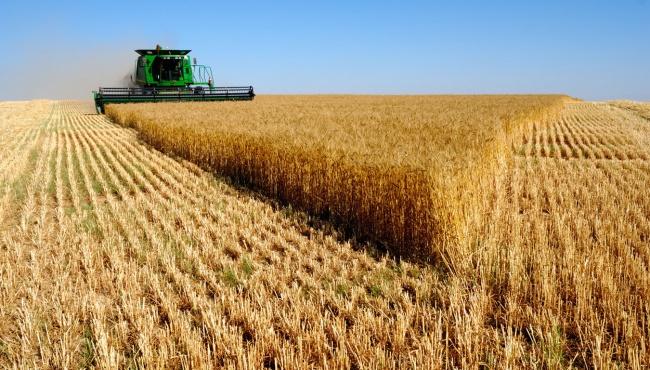 Минагропрод: В следующем году экспорт будет увеличен на 16 млрд. долл.