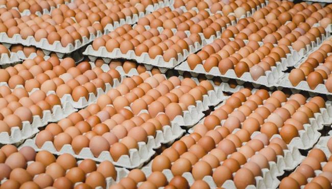 Известны результаты по проверке яиц на сальмонеллу