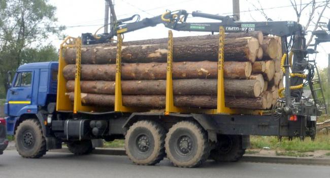 Из Украины незаконно вывозят тонны лесоматериалов