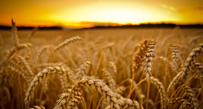 Государство готово финансово поддержать сельское хозяйство и животноводство