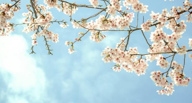 С 1 апреля во всех регионах Украины ожидается «майская» температура