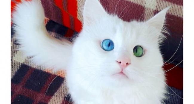 Пользователи нашли самого необычного кота в мире