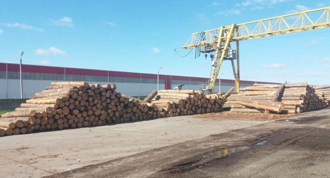 В Одесской области задержана крупная партия древесины на экспорт в обход бюджета