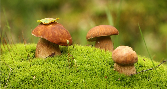 На Ивано-Франковщине собираются ограничить сбор грибов и ягод
