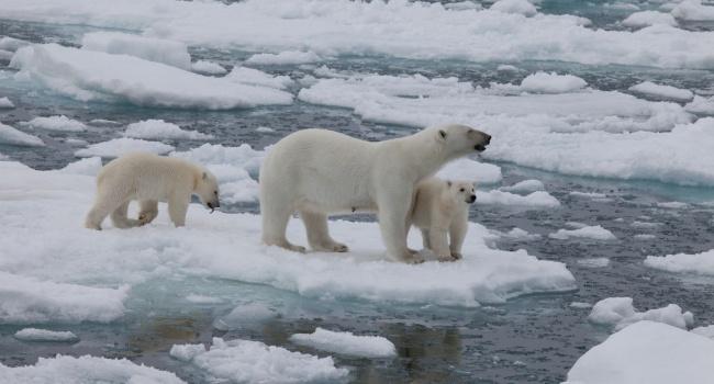 Путин решил «покорить» Арктику