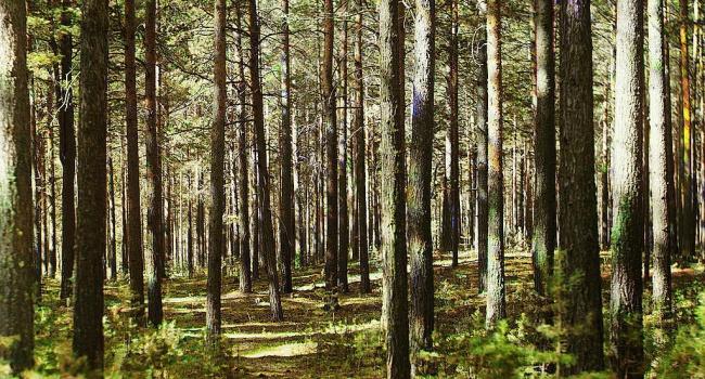 Прокурори хочуть повернути 50 гектарів лісу, які зараз орендують друзі Януковича