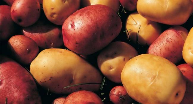 Запорожцы установят картошку вместо Ленина