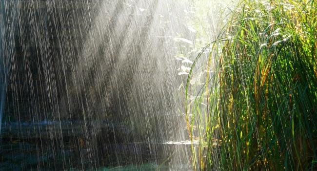 Синоптики порадовали прогнозом: в начале недели сильные дожди