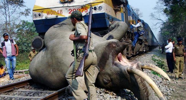 ВИндии пассажирский поезд врезался вгруппу слонов