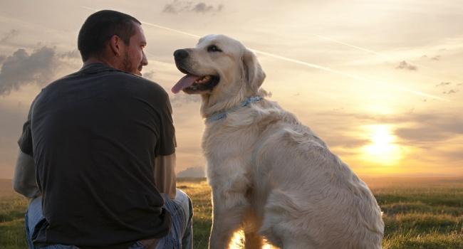 Ученые: собаки понимают, что говорят люди