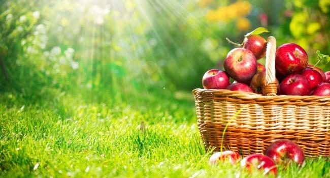 Беларусь отправила в Российскую Федерацию 5 урожаев яблок