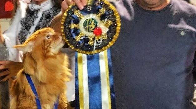 На конкурсе выбрали самого большого кота в Украине, - фото