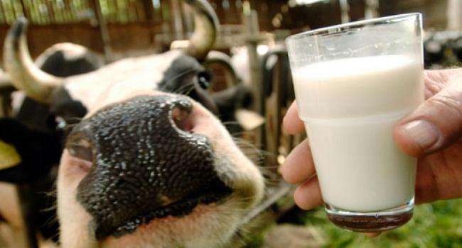 В Украине резко снизились продажи молока из-за подорожания