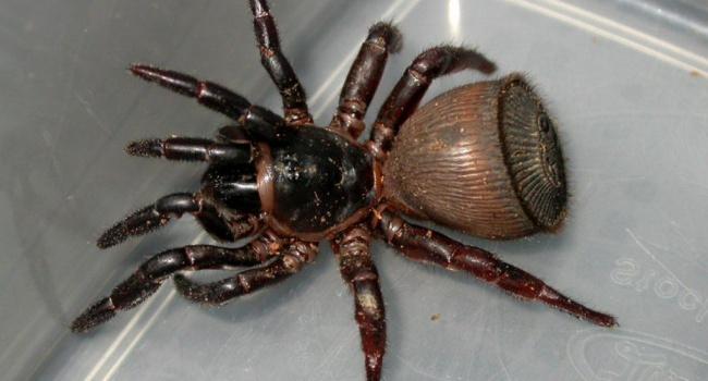 Украинские пауки непопали вКрым