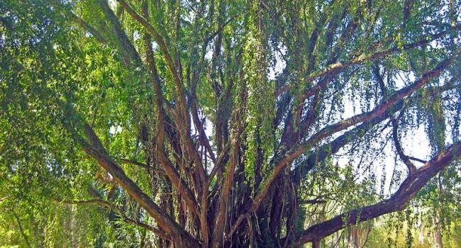 Ученые заявили о необычной находке в тропиках
