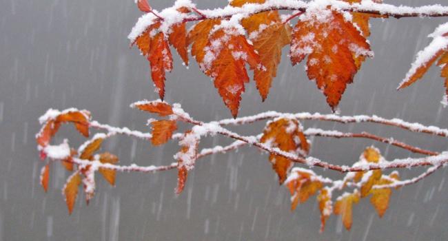 Начало зимы в столице России морозное иснежное