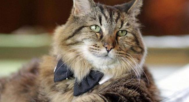 Старейший кот в мире по кличке Вельвет сбежал из дома