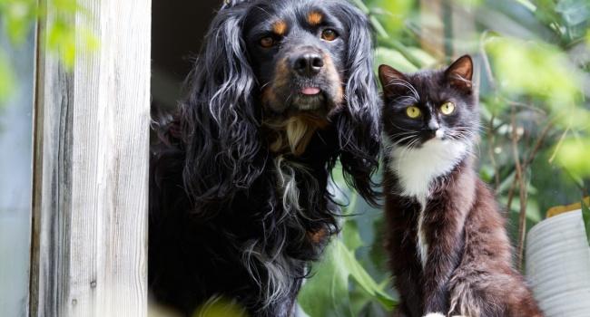 Ученые доказали, что наличие домашнего животного продлевает жизнь