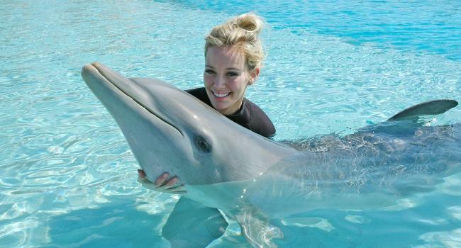 Общение счеловеком убивает дельфинов