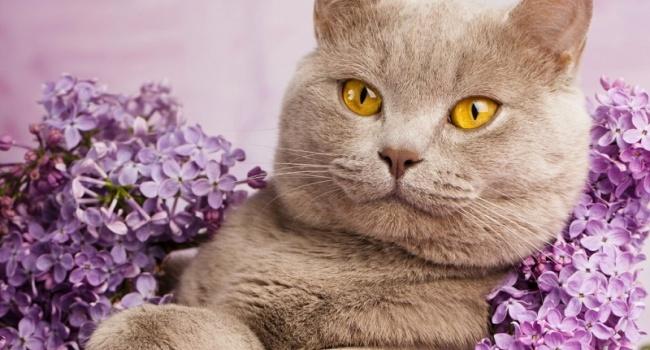 Эксперты: интеллект у кошек немного выше, чем у собак