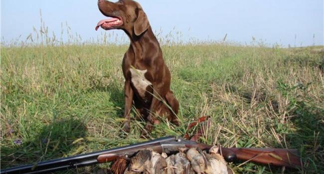 ВУкраинском государстве хотят ужесточить наказание для браконьеров