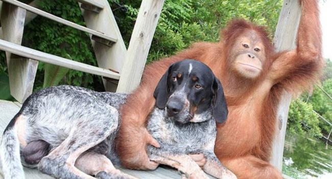Ученые: Собаки иобезьяны любят хороших иотзывчивых людей