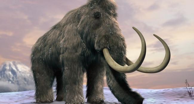 Ученые заявили о возвращении к жизни мамонтов