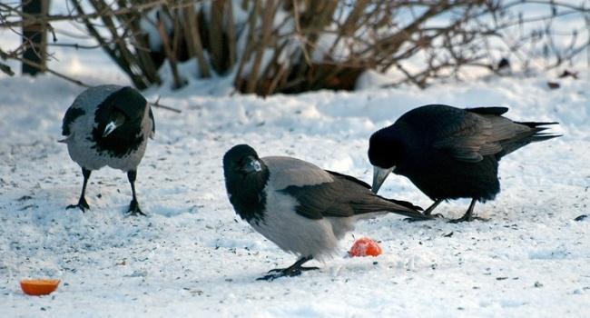 У Дніпрі невідомі відстрілюють птахів