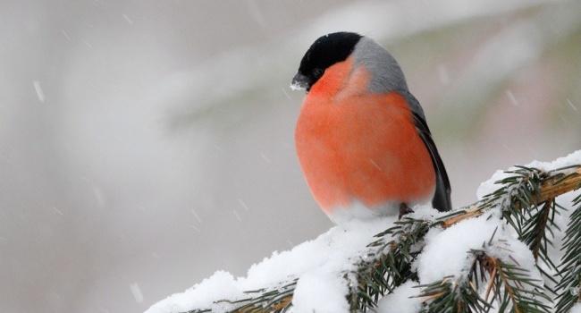 Гидрометцентр предупредил о резком похолодании 25 февраля