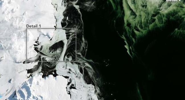 Антарктида теперь зеленая, - снимки, сделанные спутником