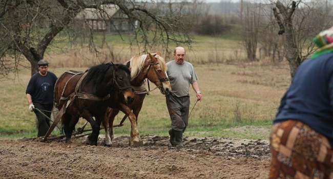 Карпенко: даже агрессия со стороны РФ не снизила стоимости гектара украинской земли ниже 1100 долларов