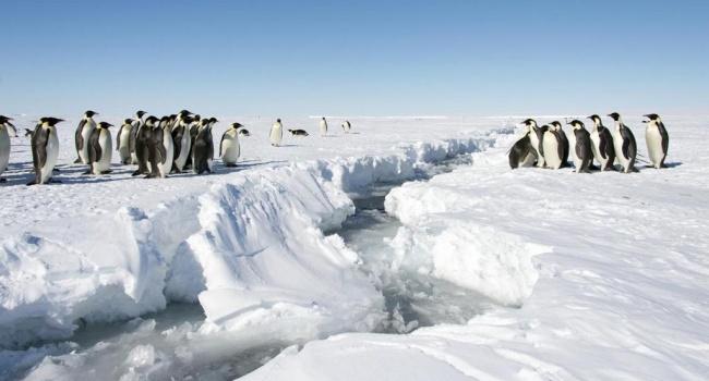 Антарктида становится зеленее из-за климатических изменений— Ученые