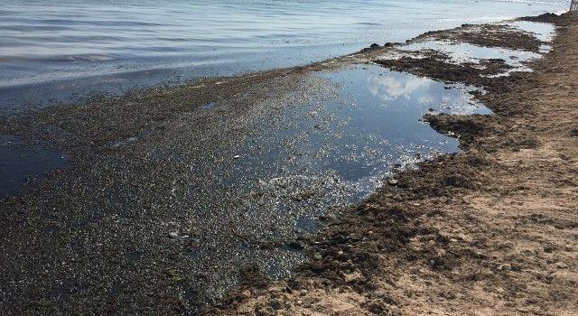 Евпатория – это не болото, а помойка, - в сети показали фото «готовых» к сезону пляжей