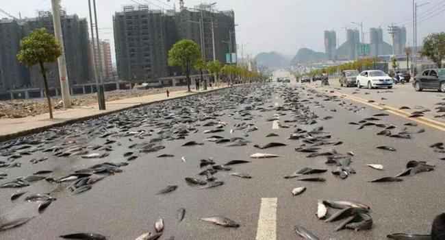 Ливень из червей и рыбы: самые необычные дожди на планете, - фото