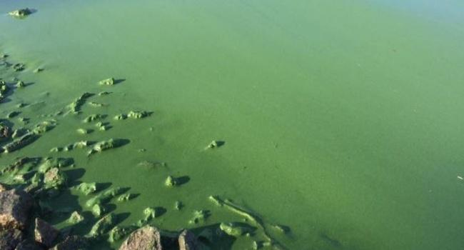 Проблеми пляжного сезону в Києві: мешканці столиці скаржаться на зелене болото замість води