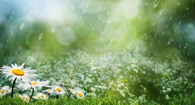 Дожди иночная прохлада ожидаются ввыходные наКубани