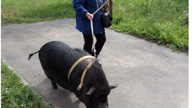 Очевидцы заметили необычное животное у одной из жительниц Киева
