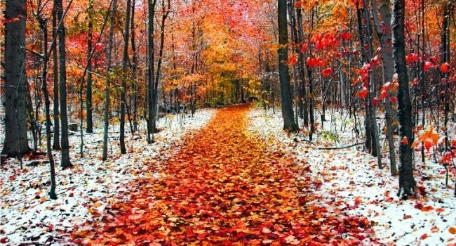 Синоптик: в 1-ый день ноября штормовой ветер стихнет ипойдет снег