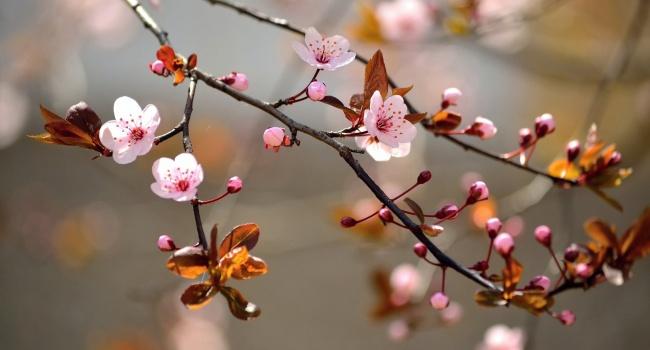 Народный синоптик рассказал, когда в Украине начнется теплая весна