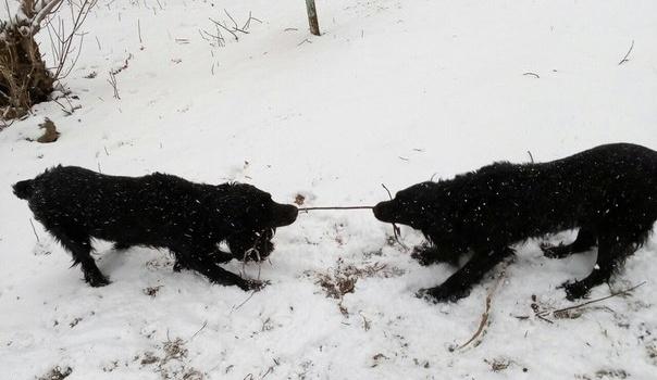 «Шел 82-й день февраля». Как кировчане отреагировали насильный снегопад в социальных сетях