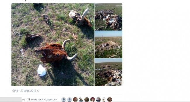 """«Туристы """"ломанулись"""": вweb-сети показали фото изКрыма накануне майских праздников»"""