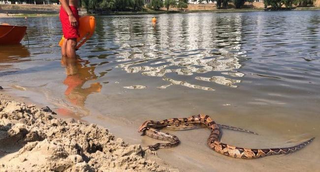 Жителей Киева напугали большие змеи на пляже