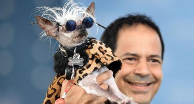 На конкурсе самых уродливых собак в США определился победитель