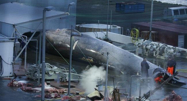 Впервые за 40 лет убили самое большое животное в мире