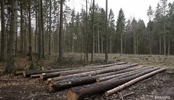 Лучше поздно, чем никогда: в Кабмине будут бороться с незаконной вырубкой леса