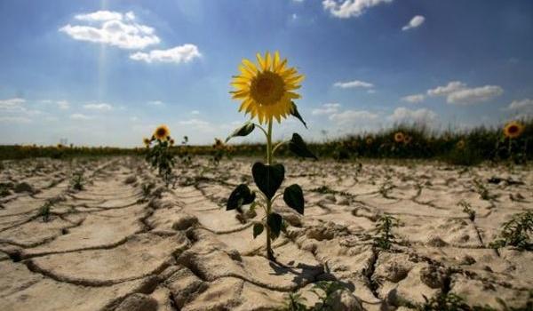ВУкраине обеспокоены засухой, провоцирующей экологическую катастрофу вКрыму