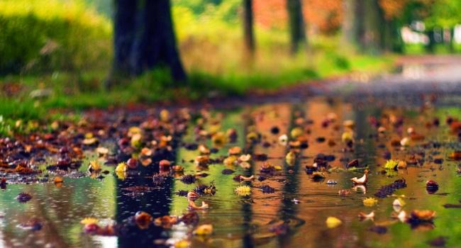 До середины сентября ожидаются дожди: синоптики уточнили прогноз